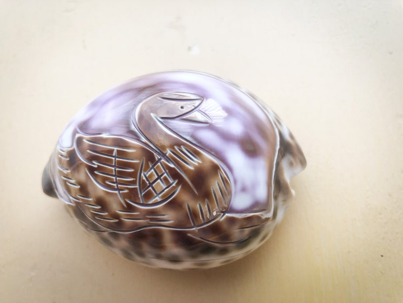Tiger Cowrie Shell with Carved SwanDuck Surfers Beach Lovers Seashell Art Carving