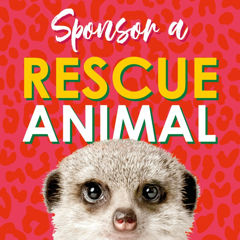 Sponsor a Rescue Animal and support their journey image 0