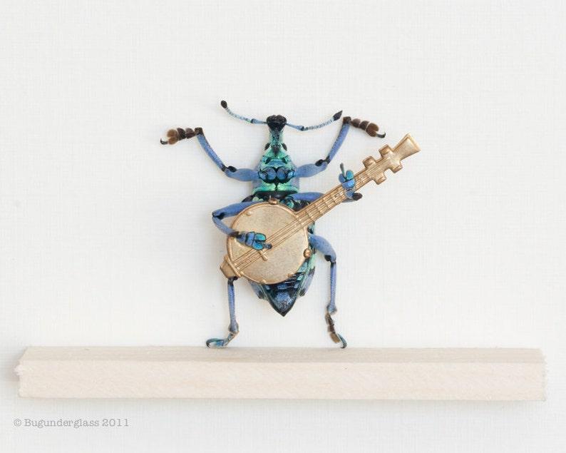 Framed Beetle Diorama Playing Banjo Insect Art Display image 0